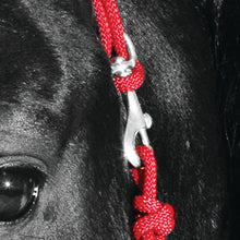 Load image into Gallery viewer, Knotted Noseband Rope Halter