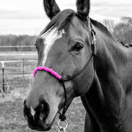 Wrapped Noseband Rope Halter