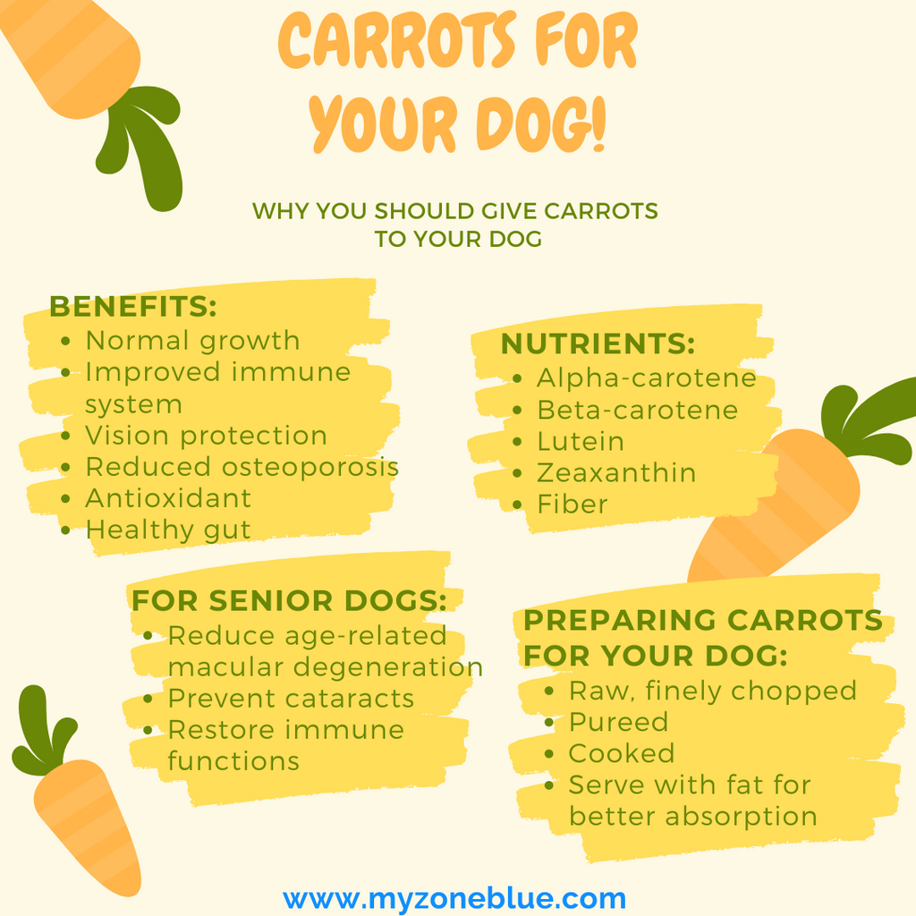 Infographics about carrots, their nutrients and benefits for dogs