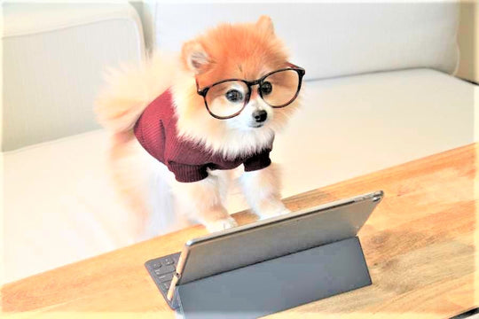 Small dog with glasses working on computer.