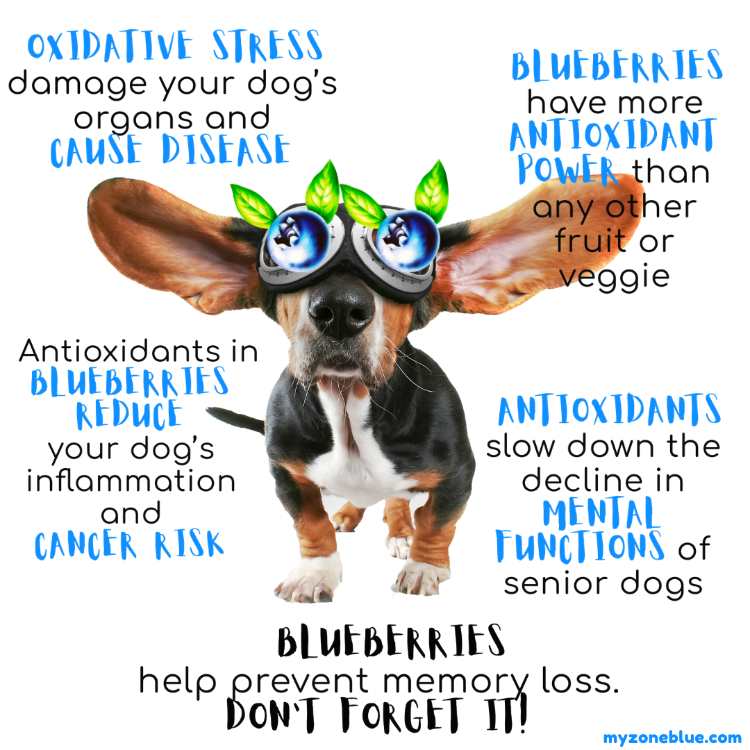 Infographics of blueberries and dogs
