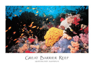 PC69 GREAT BARRIER REEF - CORAL REEF SCENE