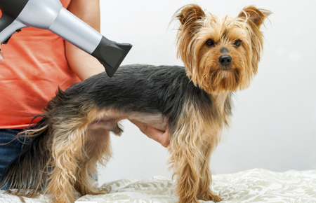 Things to keep in mind when Learning Dog Grooming