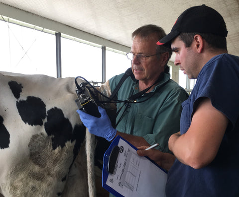 Introduction to Bovine Reproductive Ultrasound - January 2019