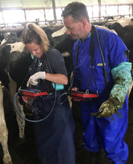 Bovine Reproductive Ultrasound Course - November 2019