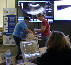 Introduction to Canine Reproductive Ultrasound - Sunday, October 19th