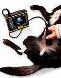 Draminski DogScan portable ultrasound for dogs usage