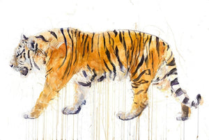 Tiger by Dave White, signed limited edition view at Enter Gallery