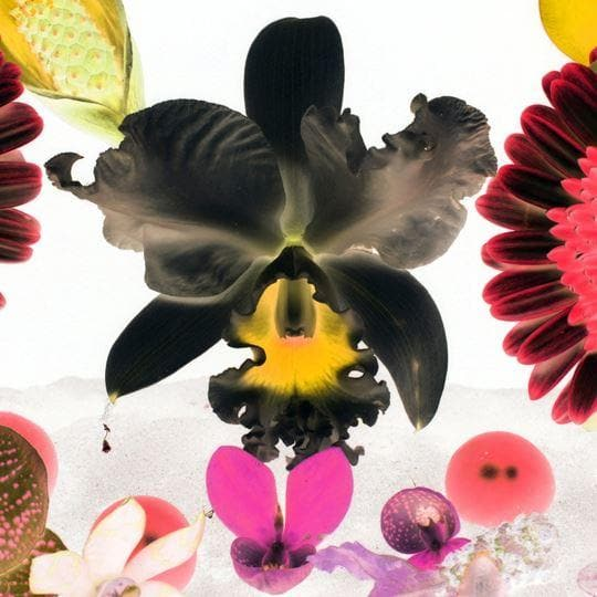 In the Night garden: Hale-Bopp artwork by Marc Quinn