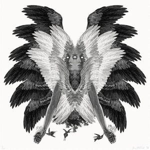 Colibri XL artwork by Dan Hillier