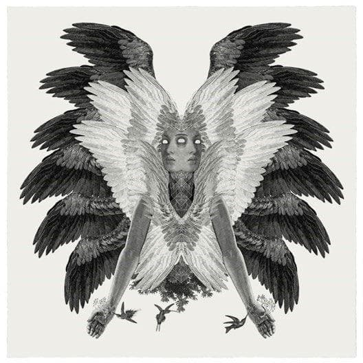 Colibri artwork by Dan Hillier
