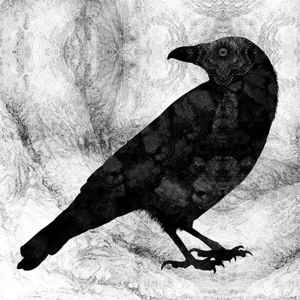Raven Limited Edition Art Print By Dan Hillier Enter Gallery