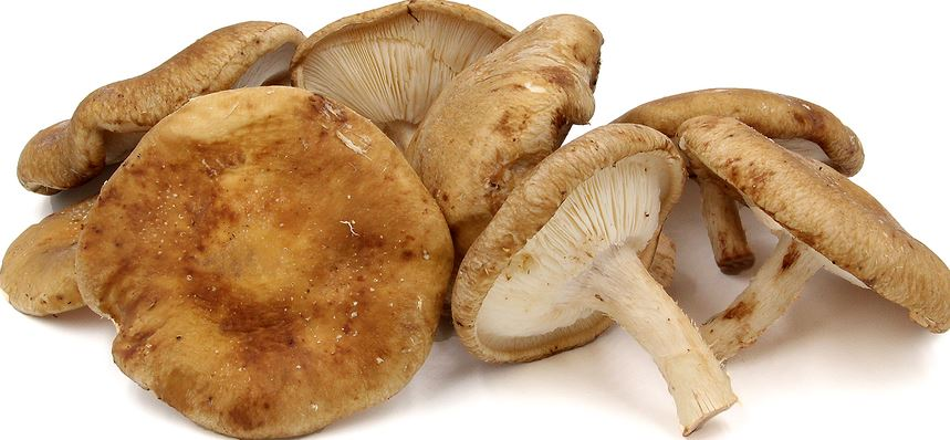 Mushrooms, Shiitake (3.5oz)