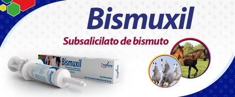 Bismuxil Pasta Oral 30 ml