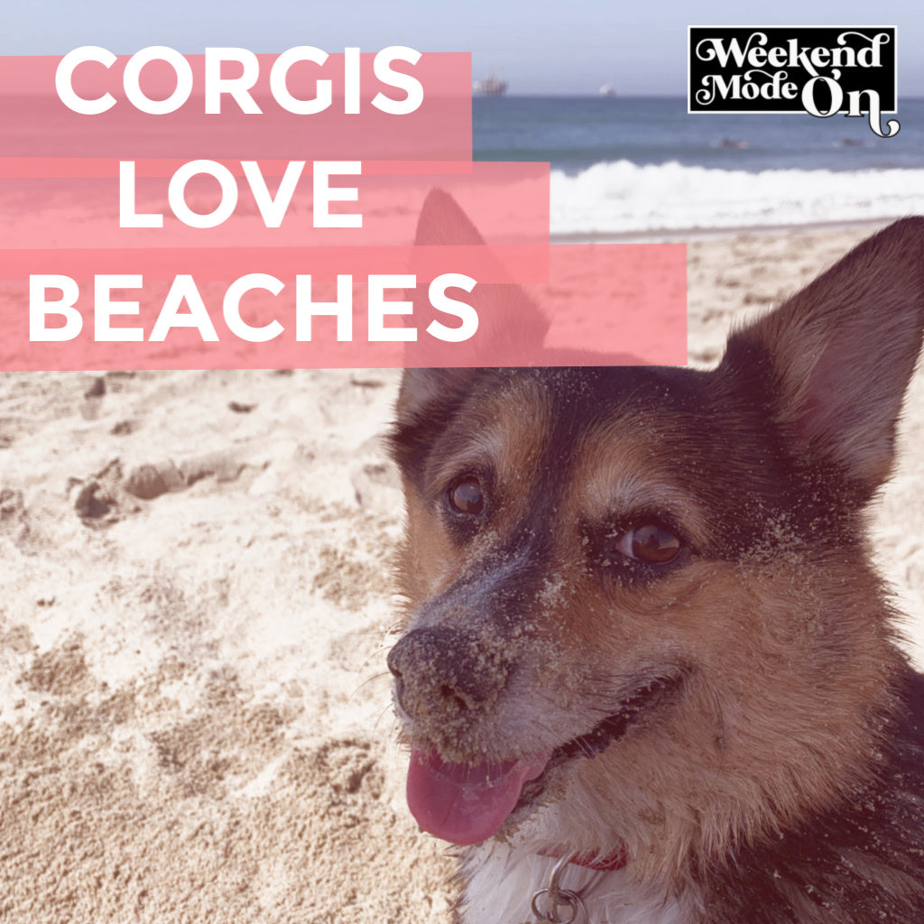 Corgis Love Beaches!