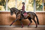Load image into Gallery viewer, PS of Sweden - Dressage Saddle Pad - Wine - Sovereign Equestrian