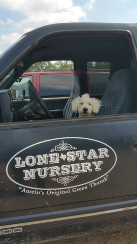 dog in driver seat of delivery vehicle with window open