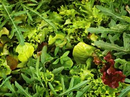 GREENS MIX 'European Mesclun'