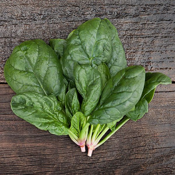 SPINACH 'Escalade'