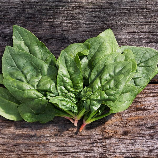 SPINACH 'Regiment'