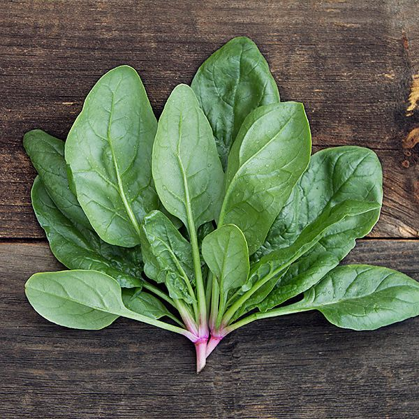 SPINACH 'Shelby'