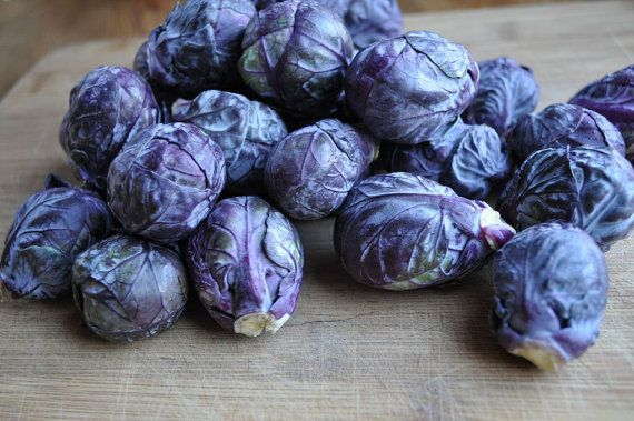 BRUSSELS SPROUT 'Falstaff Red'