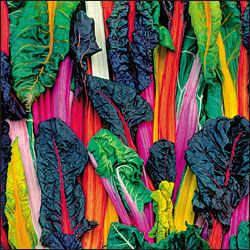 CHARD 'Five-Color'