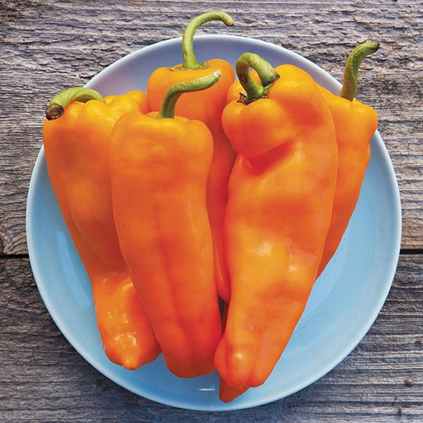 PEPPER 'Lively Italian Orange'