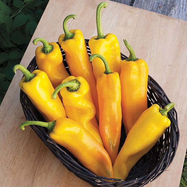PEPPER 'Lively Italian Yellow'