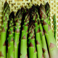 ASPARAGUS 'Connover's Colossal' --Asparagus officinalis--