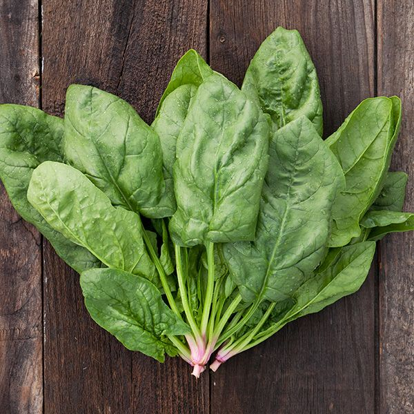 SPINACH 'Renegade'
