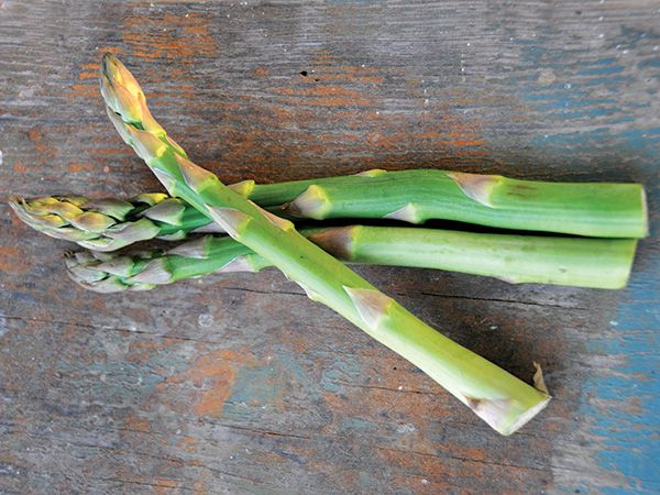 ASPARAGUS 'Mary Washington' --Asparagus officinalis--