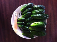CUCUMBER 'H-19 Little Leaf Pickling'