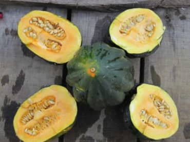 SQUASH 'Table Queen Acorn'