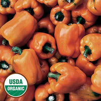 PEPPER 'Orange Sun Bell'