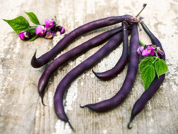BEAN 'Royalty Purple'