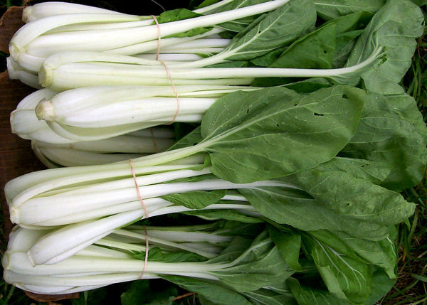 ASIAN GREENS 'White Stemmed Pac Choi'