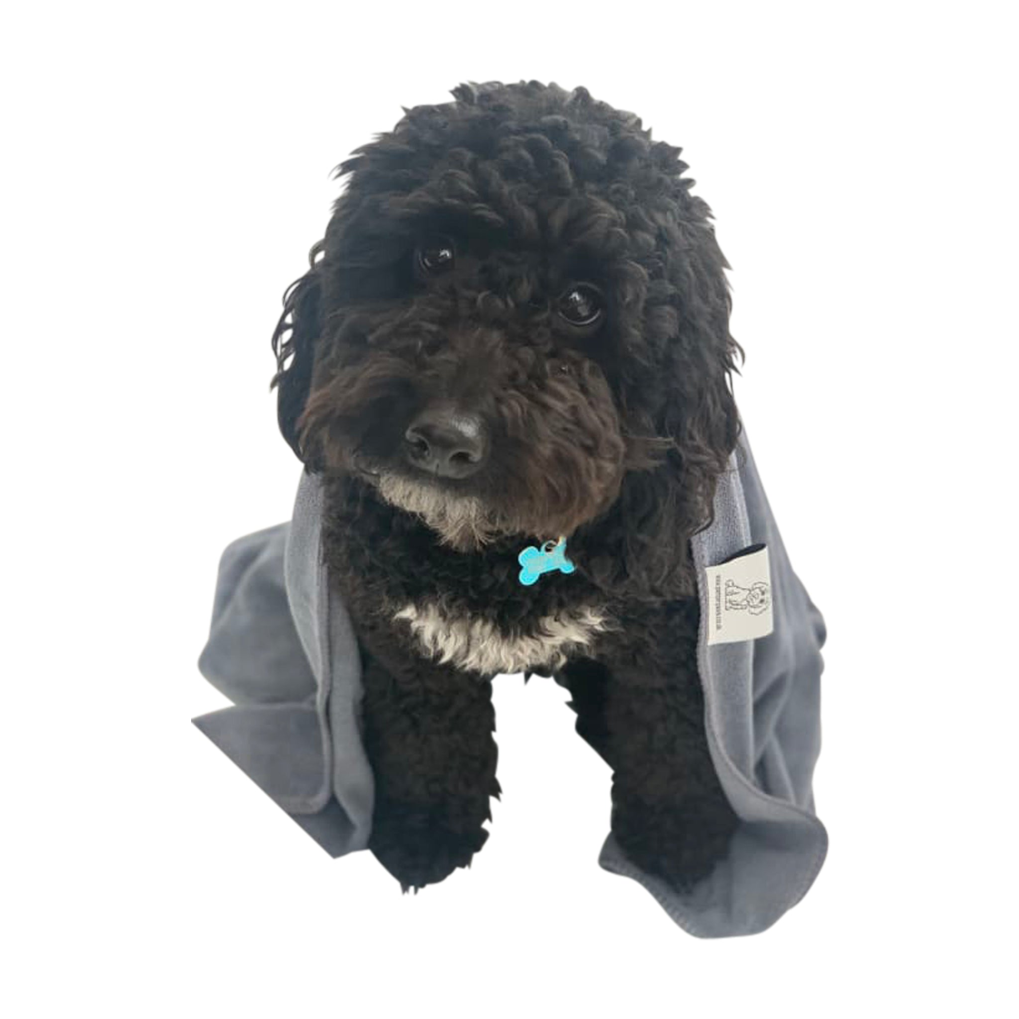 Set of 4 High-Performance Microfibre Dog Towels