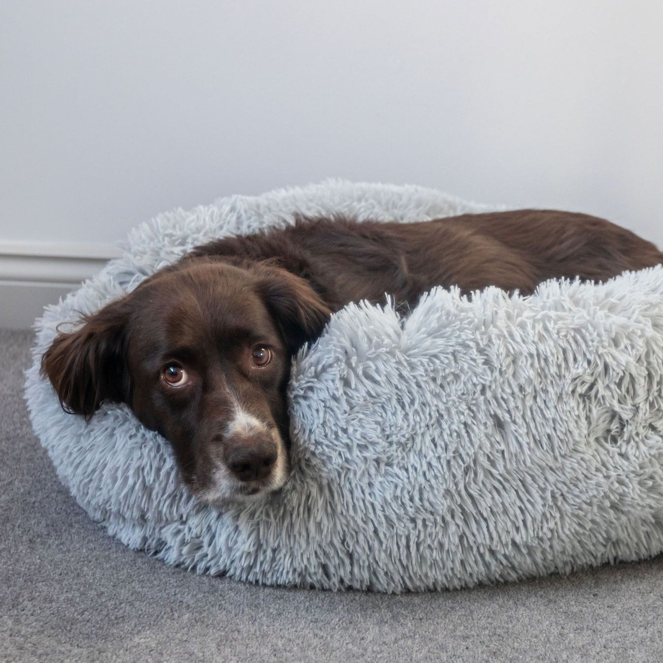 Calming Dog Bed Grey
