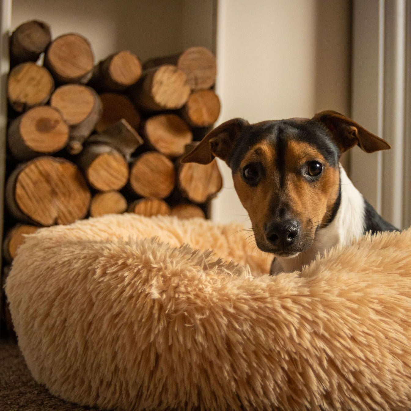 Champagne Calming Dog bed infront of log fire