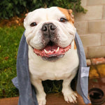 Microfibre Dog Towel