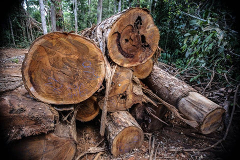 amazon deforestation wildlife destruction noplanetB save our forests no single use trees for toilet rolls paper