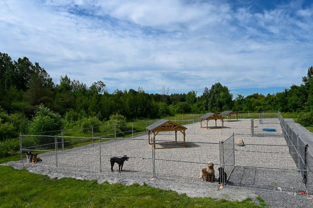 Kennel Club Boarding Outdoor Pens