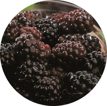 BLACKBERRIES WHOLE IQF - ALASKO (5/1KG)