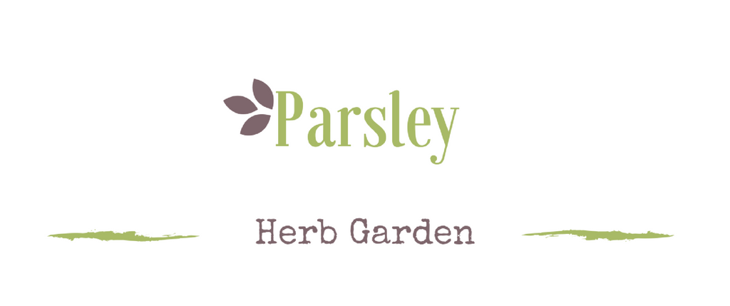 Growing a medicinal garden: Parsley