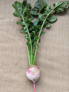 Bunch of Watermelon Radish