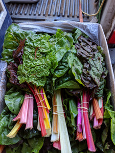2 Bunches of Rainbow Swiss Chard