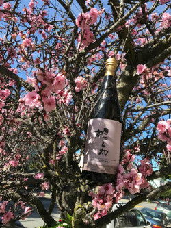 Sake Moments April 2017 B