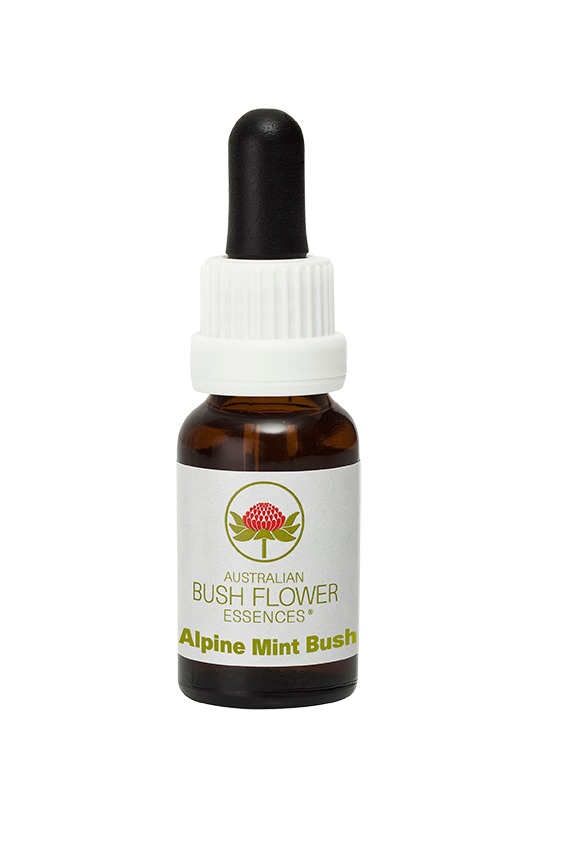 Alpine Mint Bush