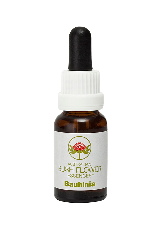 products/Bauhinia.png